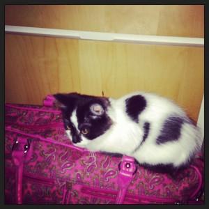 Kat op tas