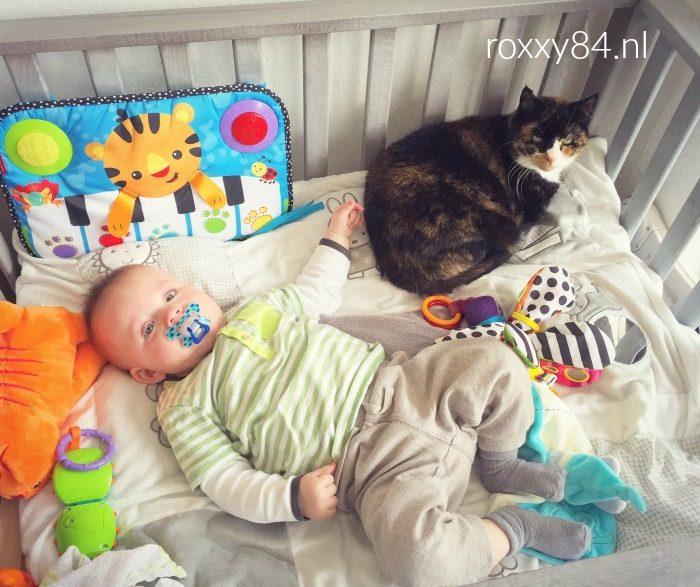 katten en baby 39 s roxxy84. Black Bedroom Furniture Sets. Home Design Ideas